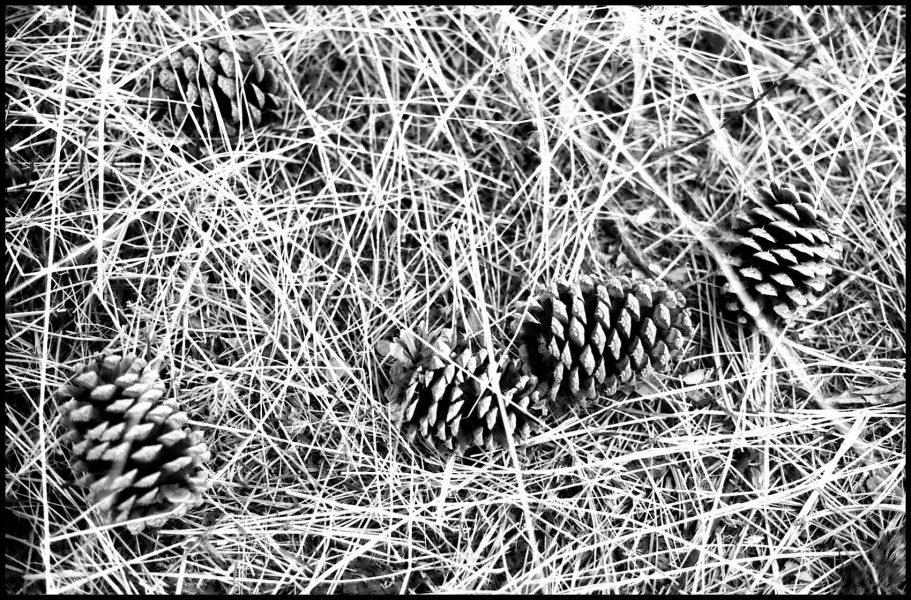 Grass & Pine Cones